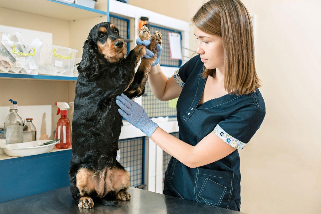 Vetservice, Cabinet Veterinar, Cabinet veterinar non-stop, Clinica veterinara, Ambulanta Veterinara Bucuresti, Servicii veterinare, Servicii veterinare non-stop, ambulanta veterinara bucuresti, cabinet veterinar baneasa, cabinet veterinar bucuresti, cabinet veterinar bucurestii noi, cabinet veterinar jiului, cabinet veterinar non stop, cabinet veterinar non stop bucuresti, chirurgie veterinara, clinica veterinara bucuresti non stop, medic veterinar bucuresti, spital veterinar, spital veterinar bucuresti, sterilizare caini, sterilizare caine, sterilizare catele, sterilizare pisica, veterinar non stop, doctor veterinar, farmacii veterinare, clinica animale, veterinar online non stop, farmacie veterinara, salvare veterinara, ambulanta animale bucuresti, medicambulanta veterinara, ambulanta veterinaranon stop, ambulanta veterinara bucuresti, ambulanta veterinara ilfov, ambulanta veterinara caini, ambulanta animale bucuresti, medic ambulanta veterinara, veterinar online, salvare veterinara